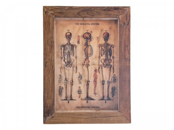 Wandbild Skeleton