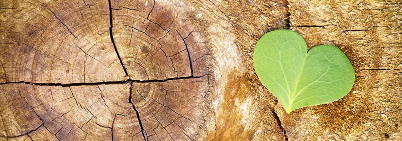 media/image/Ueber-uns_Nachhaltige-Holzproduktion.jpg