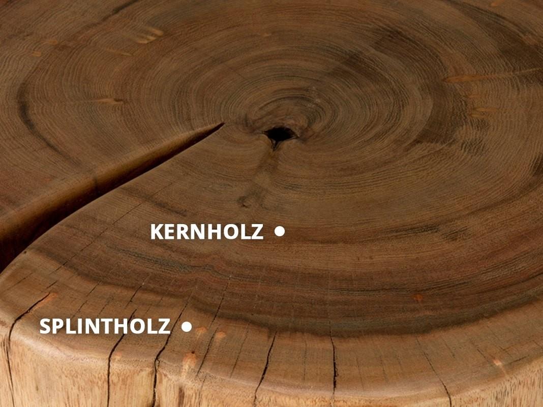 Splintholz_und_Kernholz_unterscheiden